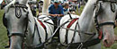 Konjska kopita, čeze i fijakeri