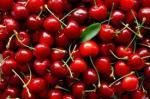 Najisplativija proizvodnja trešnje i višnje