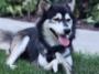 Ovaj pas napokon može da trči zahvaljujući odštampanim nogama
