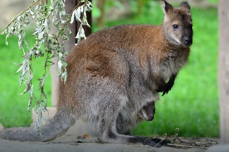 Šta ne treba raditi u Zoo vrtu: Ne hranite životinje, ne lupajte u ograde
