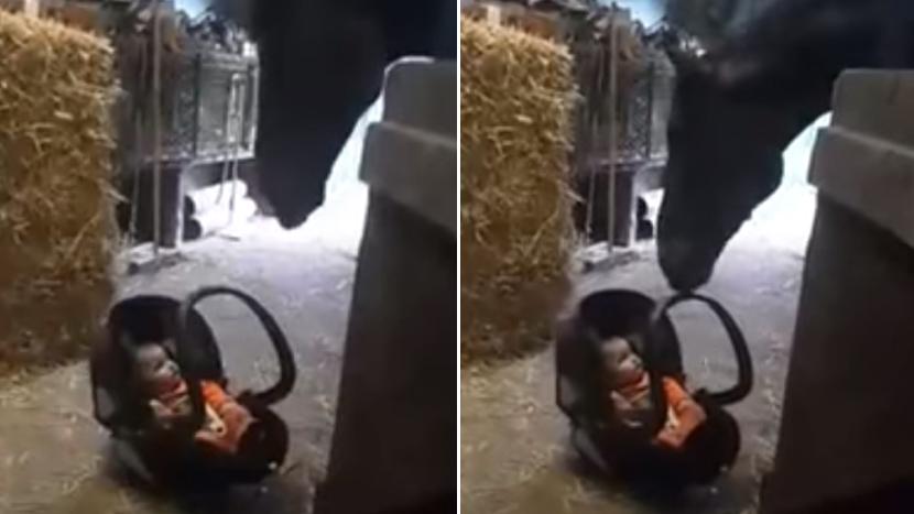 ZA DOBRO JUTRO: Beba je sela na kucino mesto, a onda je pas odlučio da se bor...