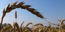 Dvorkovič: Ankara da ukine carine na žitarice iz Rusije