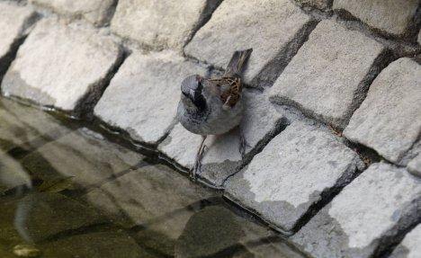 MAČKE SU IM NAJVEĆI NEPRIJATELJI: Dživdžani su simbol Beograda