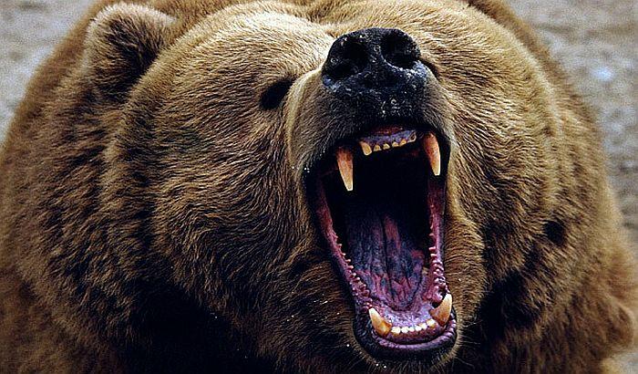 Medved usmrtio dečaka tokom trke