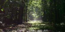 Za šume 750 miliona dinara