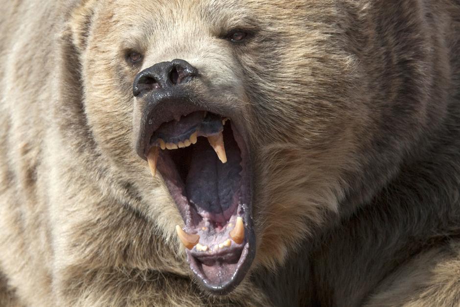 TO MOŽE SAMO LUDI RUS: Iznabadao medveda u šumi