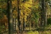 BG: Sajam zapošljavanja u drvnoj industriji