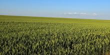 Danima polja kod Velikih Radinaca