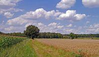 Država vraća 100.000 hektara zemljišta građanima?