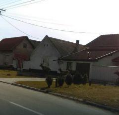 Mirno nedeljno jutro u vojvođanskom gradu prekinuo NEOČEKIVANI STAMPEDO
