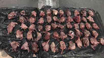 Na Batrovcima zaustavili krijumčara: Kada su otvorili ranac, zatekli su ubijene ptice (FOTO)