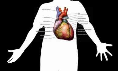 Napredak nauke: Srčano tkivo od lista spanaća!