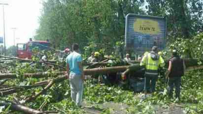 Drvo palo na automobil u Novom Sadu, žena poginula
