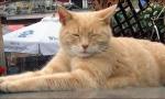 PREMINUO GRADONAČELNIK: Odlazak mačka Stabsa koji je preživeo atentat 2013.