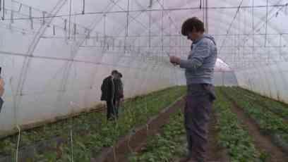 Popović  obišao  poljoprivredna  gazdinstava u Zrenjaninu