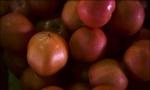 Rusija: Pronađeno 13 tona zaraženih jabuka iz Srbije!