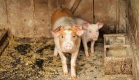 Skok cene mesa bio namešten da bi klaničari i trgovci napunili džepove