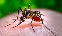 U Beogradu i zimi protiv komaraca