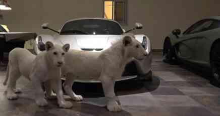 VIDEO: Kolekciju hiperautomobila katarskog bogataša čuvaju beli lavovi