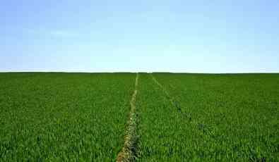 Žitište: Rumuni vraćaju zemljište