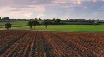 Zrenjanin: Žetva na uzurpiranom zemljištu