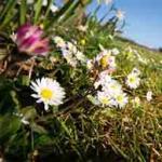 Zaštićena flora i fauna u Srbiji