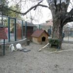 Deca  ukrala kengura!