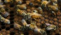 Korak napred za srpsko pčelarstvo