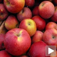 Manje jabuka za izvoz u Rusiju