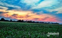 Mraz prijeti rekordnom rodu kukuruza