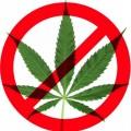 Vaš mozak na drogama: Marihuana