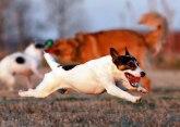 Koje su tri najagresivnije rase pasa?