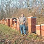 Košnice bez pčela