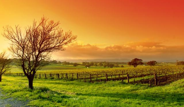 Kralj stočara napokon prodao farmu veličine Irske
