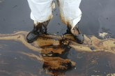 Srpski i japanski naučnici udruženo protiv naftnog zagađenja
