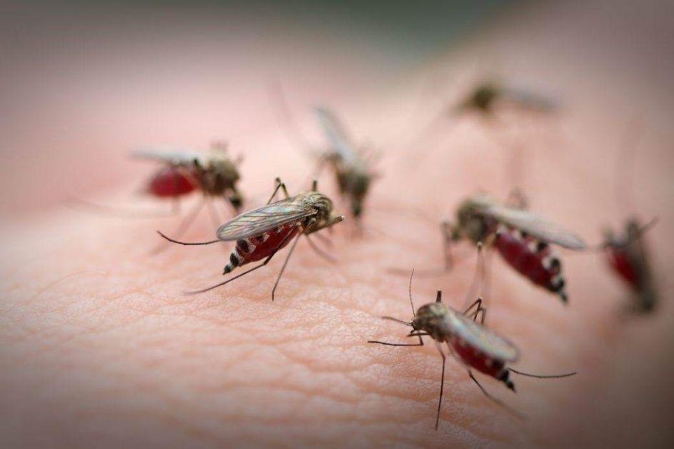 Вирус Западног Нила регистрован код комараца у Србији