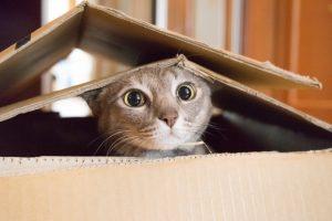 16 zanimljivosti o mačkama: Od špijuniranja, preko uticaja na izumiranje vrsta do Isaka Njutna