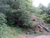 Akcija ZASADI DRVO i na teritoriji Šumskog gazdinstva Vranje