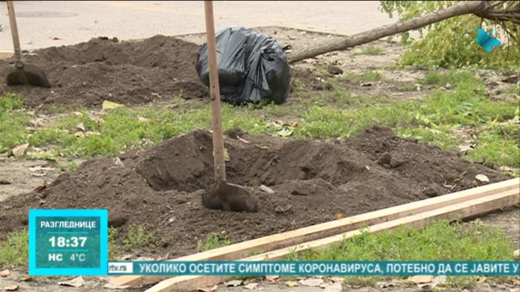 Akcija ozelenjavanja održana u Osnovnoj školi Sonja Marinković