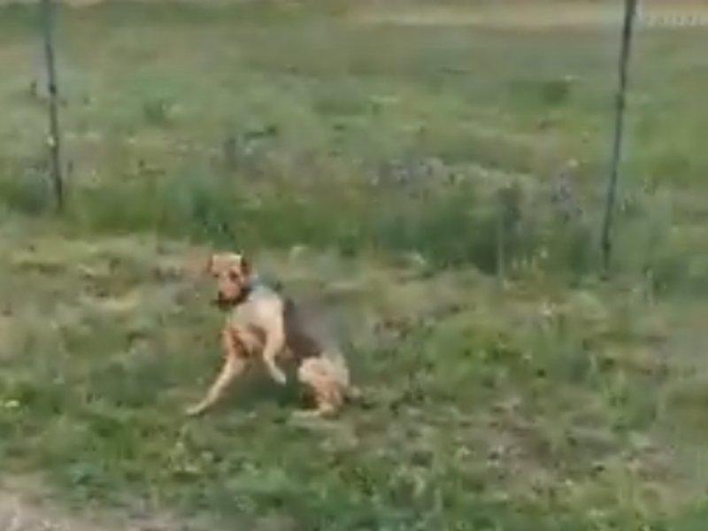 """Aktivistkinja podnosi krivičnu prijavu protiv radnika """"Mediane"""" koji je povredio psa"""