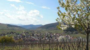 Alzas/Rikvir: Nemačka tradicija na francuski način