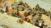 Muškarac u Arizoni umro od uboda roja pčela