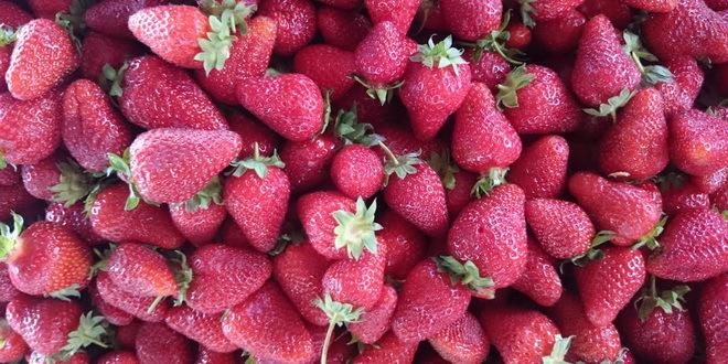 Australija: Hapšenje zbog igala u jagodama