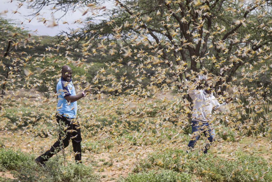 BIBLIJSKA POŠAST NAPALA AFRIKU: Neverovatna najezda skakavaca, rojevi dugački i do 60 kilometara (VIDEO)