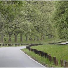 BITKA ZA KOŠUTNJAK: Sečenje šume uznemirilo Beograđane! Oglasili se iz Avala filma: NIŠTA PO CENU PRIRODE