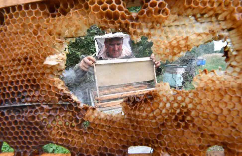 BOŽJE ČUDO U GRČKOJ: Pčelar stavio ikone u košnice, a kada ih je otvorio ostao je u ŠOKU (VIDEO)