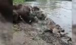 BRUTALNA SCENA U ZOO VRTU: Medvedi rastrgli vučicu pred šokiranom decom (VIDEO)