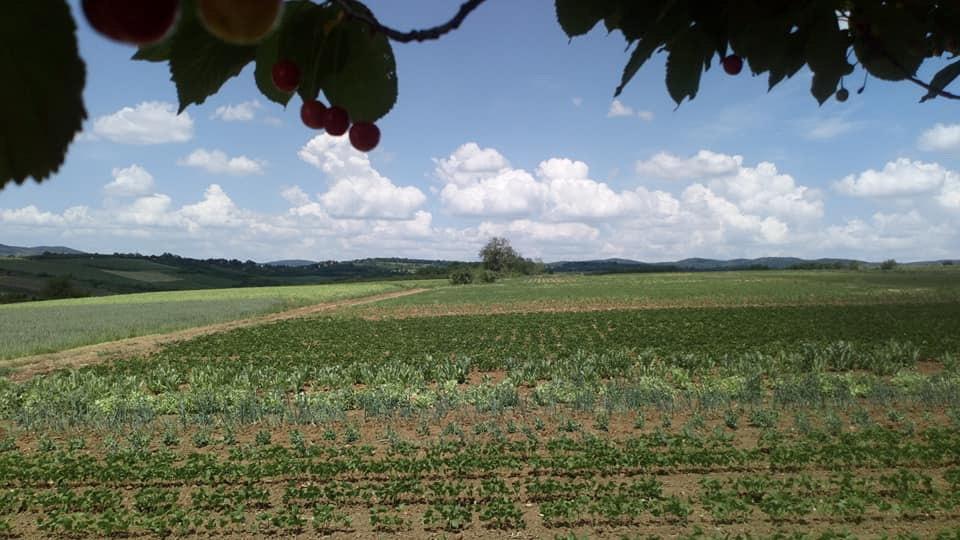 Banatski poljoprivrednici primer kako iskoristiti državne subvencije