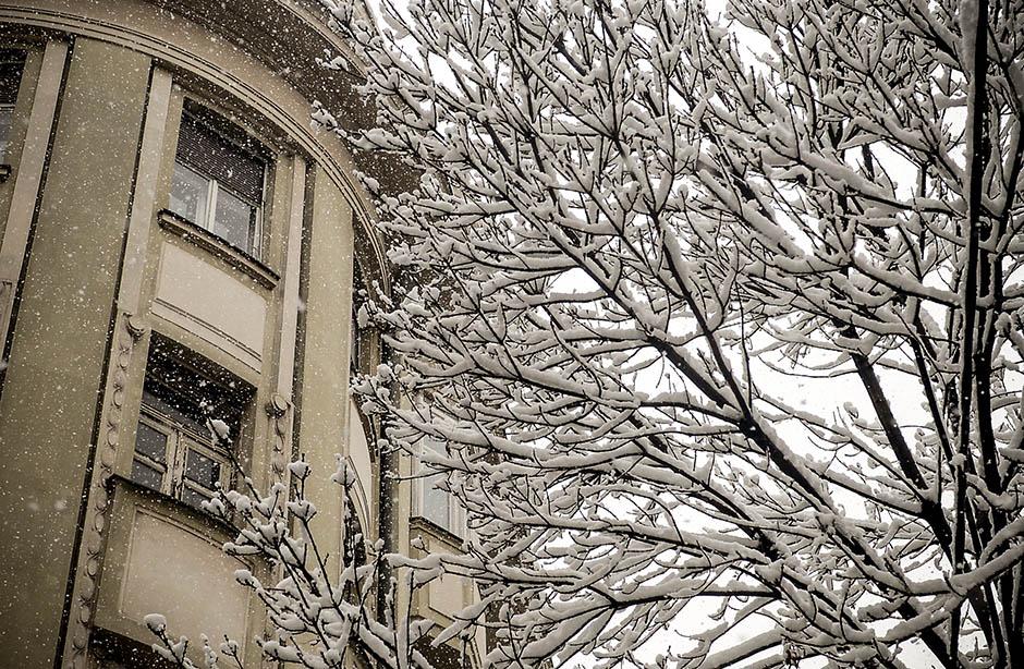 Beograđani, pažnja - pada drveće!  FOTO
