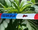 Beograđanin krio 6 kilograma marihuane u kući u Gadžinom Hanu